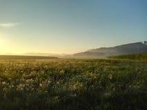 Туман в утре Солнце Стоковая Фотография