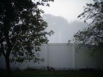 туман в утре Стоковая Фотография