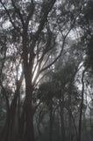 Туман в forrest стоковое фото