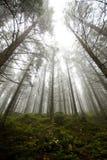 Туман в Tatras Стоковая Фотография