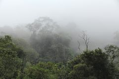Туман джунглей стоковое изображение rf