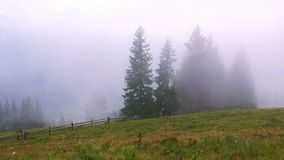 Туман леса горы акции видеоматериалы