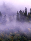 Туман леса ели Стоковые Фотографии RF