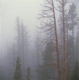Туман леса, национальный парк скалистой горы, Колорадо Стоковая Фотография