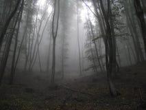 Туман леса Стоковое Изображение
