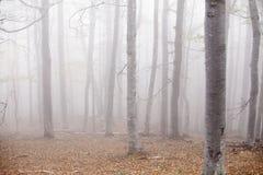 Туман леса Стоковые Фото