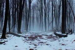 Туман зимы Стоковое фото RF