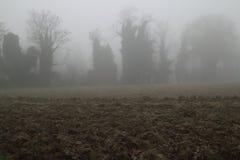 Туман зимы Стоковые Изображения