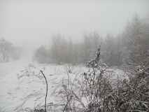 Туман 2 зимы Стоковая Фотография