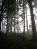 Туман и атмосфера на Crupspitz, Praettigau падения, Швейцария Стоковые Фотографии RF