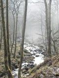 Туман и туман в английском wodland с горой текут Стоковая Фотография