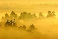 Туман и лесохозяйство утра стоковые фотографии rf