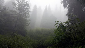 Туман и лес стоковые изображения