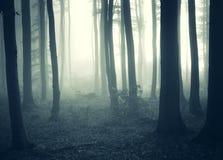 Туман и свет в темном загадочном лесе стоковые изображения