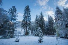 Туман и снег на деревьях и скалах национального парка Yosemite, Калифорнии в зиме во время восхода солнца Стоковая Фотография RF