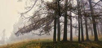 Туман и цвета осени в лесе в парк стоковое фото rf