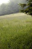 туман лужка холма Стоковые Изображения RF