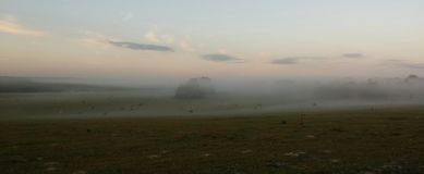 Туман над выгоном стоковая фотография rf