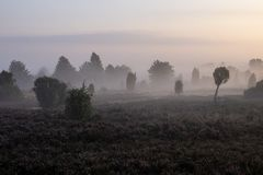 Туман над красивым цветя ландшафтом вереска на восходе солнца стоковые фотографии rf