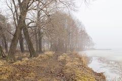 Туман на береге стоковое изображение