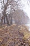 Туман на береге стоковые фотографии rf