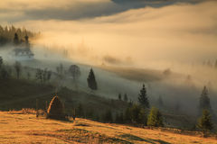 Туман на восходе солнца Стоковая Фотография RF