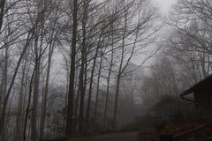 Туман на горе бальзама, больших закоптелых горах, Северной Каролине Стоковые Фотографии RF