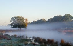 Туман на озере Стоковые Изображения