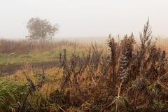 Туман на поле осени стоковое фото