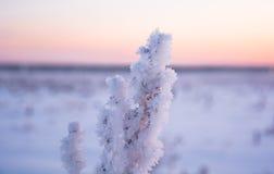Туман на сухой траве Стоковое Изображение RF