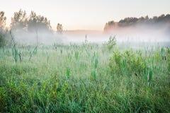 Туман на трясине на зоре Стоковая Фотография