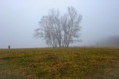 Туман на луге в марте Стоковые Изображения