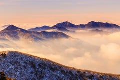 Туман на утре Стоковые Изображения RF