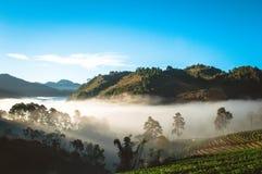 Туман на ферме клубники стоковое изображение rf
