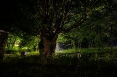 Туман ночи в деревне загадочно лунный свет Освещать вверх по качанию около дерева в дворе Свет от задней стороны деревьев Стоковое Изображение RF
