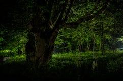 Туман ночи в деревне загадочно лунный свет Освещать вверх по качанию около дерева в дворе Свет от задней стороны деревьев Стоковое Фото