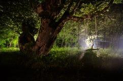 Туман ночи в деревне загадочно лунный свет Освещать вверх по качанию около дерева в дворе Свет от задней стороны деревьев Стоковая Фотография