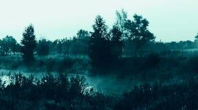 Туман ночи Стоковое Изображение
