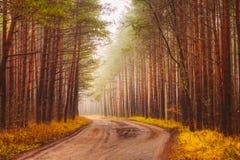 Туман дороги в лесе Стоковые Фото