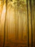 Туман освещения в лесе Стоковое Изображение RF
