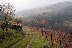 Туман осени в высокогорном винограднике Стоковое Изображение RF