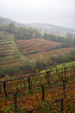 Туман осени в высокогорном винограднике Стоковые Изображения RF
