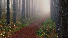 Туман осени в лесе Стоковое Изображение