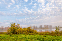 Туман осени в смешанном лесе Стоковая Фотография RF