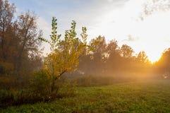 Туман осени в смешанном лесе Стоковые Фотографии RF