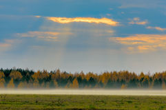 Туман осени и луч солнца Стоковые Изображения RF