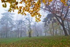 туман осени Стоковая Фотография RF