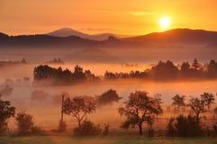 Туман осени Стоковое фото RF