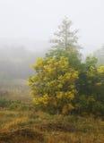 Туман осени Стоковые Фото