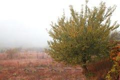 Туман осени Стоковые Изображения RF